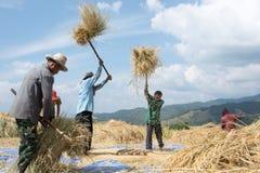 Agricoltori raccogliere, trebbiante Immagini Stock Libere da Diritti