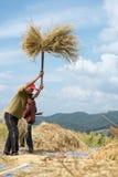 Agricoltori raccogliere, trebbiante Fotografia Stock