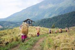 Agricoltori raccogliere, trebbiante Immagini Stock