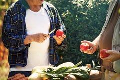 Agricoltori senior Immagine Stock Libera da Diritti