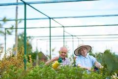 Agricoltori senior che lavorano nel giardino Fotografie Stock