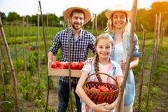 Agricoltori sorridenti con i pomodori in giardino Fotografie Stock Libere da Diritti