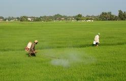 Agricoltori sul giacimento del riso Immagini Stock Libere da Diritti