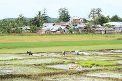 Agricoltori sul giacimento del riso Fotografie Stock Libere da Diritti