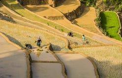 Agricoltori sul giacimento del riso nel Vietnam Fotografia Stock Libera da Diritti