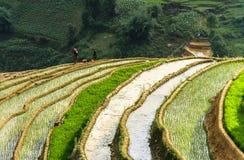 Agricoltori sul giacimento del riso nel Vietnam Immagini Stock Libere da Diritti