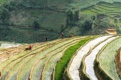Agricoltori sul giacimento del riso nel Vietnam Immagini Stock