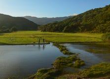 Agricoltori sul giacimento del risone Immagine Stock Libera da Diritti