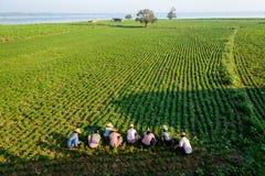 Agricoltori sul lavoro intorno al ponte di U-Bein Immagini Stock