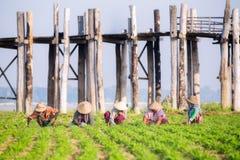Agricoltori sul lavoro intorno al ponte di U-Bein Fotografia Stock