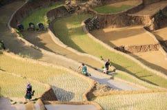 Agricoltori sulle risaie a terrazze nel Vietnam Fotografia Stock