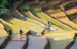 Agricoltori sulle risaie a terrazze nel Vietnam Immagini Stock
