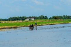 Agricoltori tailandesi che lavorano con un aratro tenuto in mano del motore in un riso Immagini Stock