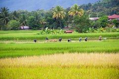 Agricoltori tailandesi non identificati Fotografia Stock