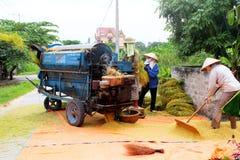 Agricoltori vietnamiti che trebbiano riso Immagini Stock Libere da Diritti