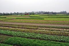 Agricoltori vietnamiti nel campo fotografie stock libere da diritti