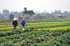 Agricoltori vietnamiti nel campo immagine stock