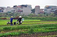 Agricoltori vietnamiti nel campo con la città nei precedenti Fotografia Stock Libera da Diritti
