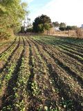 agricoltura fotografie stock