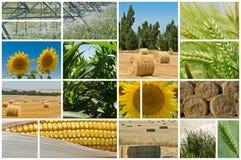 Agricoltura. Fotografia Stock