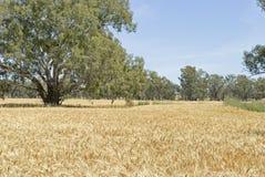 Agricoltura Immagini Stock