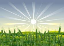 Agricoltura. Fotografia Stock Libera da Diritti