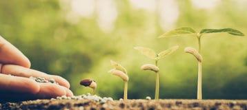agricoltura Fotografie Stock Libere da Diritti