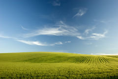 Agricoltura. Field in a day of sun Stock Image