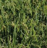 agricoltura immagini stock libere da diritti