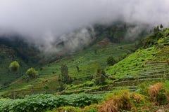 Agricoltura agricola in Java Immagine Stock