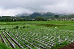 Agricoltura agricola in Java Fotografie Stock Libere da Diritti