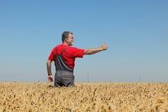Agricoltura, agricoltore che gesturing nel giacimento di grano con il pollice su Immagini Stock