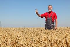 Agricoltura, agricoltore che gesturing nel giacimento di grano con il segno V della mano Immagini Stock