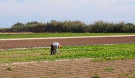 Agricoltura - agricoltore che lavora nel campo Fotografie Stock Libere da Diritti