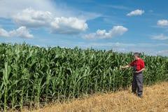 Agricoltura, agricoltore nel campo di grano Fotografia Stock