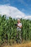 Agricoltura, agricoltore nel campo di grano Fotografie Stock