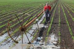 Agricoltura, agricoltore nel giacimento della paprica con il sistema di innaffiatura Immagine Stock