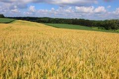 Agricoltura, agronomia e fondo di azienda agricola Agricoltura, agron Fotografia Stock Libera da Diritti