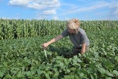 Agricoltura, agronomo a terreno coltivabile Fotografia Stock Libera da Diritti