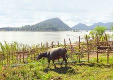 Agricoltura al Mekong Fotografia Stock