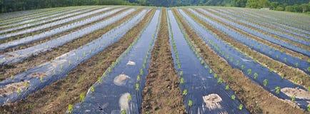 Agricoltura, alimento, azienda agricola nel paese basco Fotografia Stock Libera da Diritti