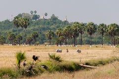 Agricoltura all'isola di Bilu, Myanmar Fotografia Stock Libera da Diritti