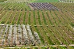 Agricoltura alla sorgente Immagine Stock
