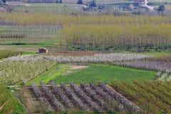 Agricoltura alla sorgente immagine stock libera da diritti