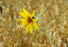 Agricoltura Altaya Fotografia Stock Libera da Diritti