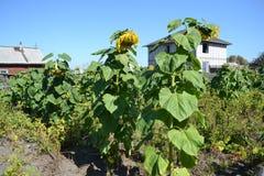 Agricoltura Altaya Immagini Stock Libere da Diritti