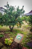Agricoltura arancio del mandarino per il turismo Fotografie Stock Libere da Diritti