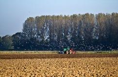 Agricoltura - aratro del trattore in su Immagine Stock Libera da Diritti