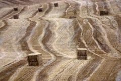 agricoltura artistica Immagine Stock Libera da Diritti