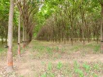 agricoltura, Asia, bellezza, ciotola, ramo, il raccolto, taglio, goccia, enviro Fotografia Stock
